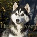 Husky Haven Tour De France